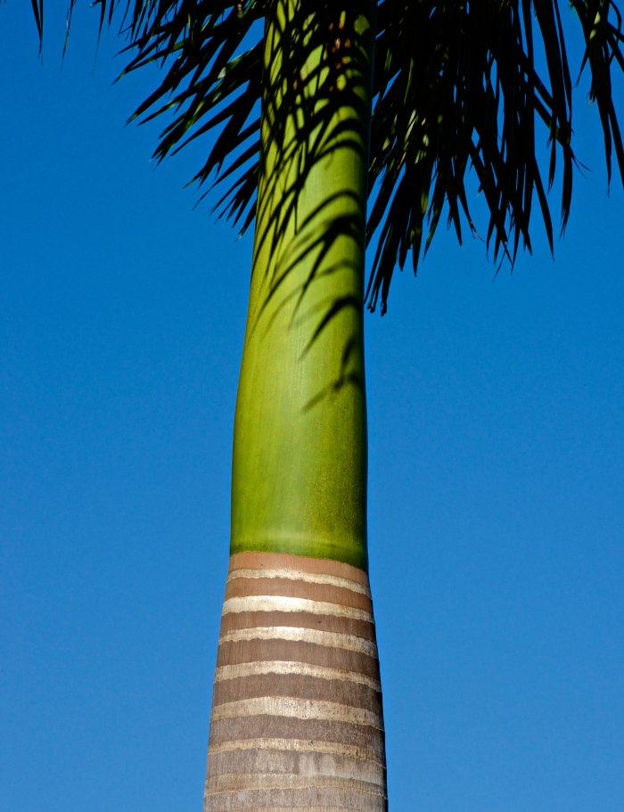 1---Florida--2-2014-2049